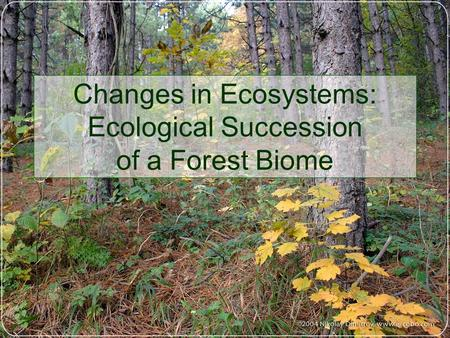 Changes in Ecosystems: Ecological Succession of a Forest Biome.