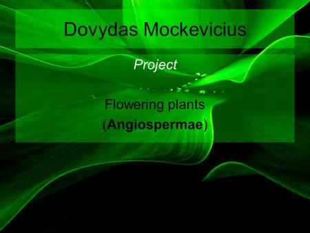 Dovydas Mockevicius Project Flowering plants (Angiospermae)