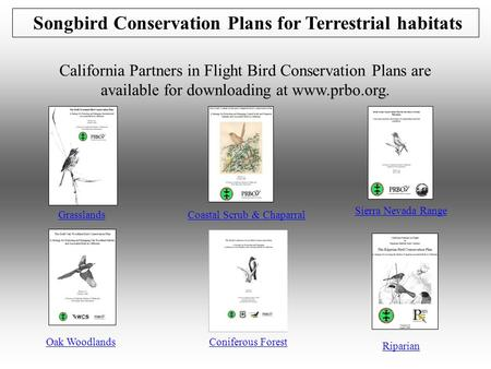 Songbird Conservation Plans for Terrestrial habitats California Partners in Flight Bird Conservation Plans are available for downloading at www.prbo.org.