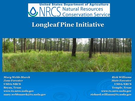 Mary Webb-Marek Zone Forester USDA-NRCS Bryan, Texas Longleaf Pine Initiative Longleaf Pine Initiative Rick.