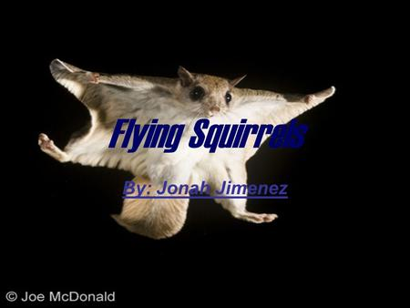 "Flying Squirrels By: Jonah Jimenez. Adaptations A flying squirrel's physical traits are it's fur ""wings"" and tail. A flying squirrel's behavioral traits."