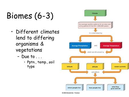Biomes (6-3) Different climates lend to differing organisms & vegetations –Due to... Pptn., temp., soil type.