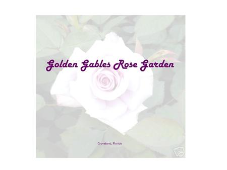 Golden Gables Rose Garden Groveland, Florida Golden Gables Rose Garden West Trumpeter (Ireland) Clotilde Soupert Celine Forestier (France) Madam Ernest.