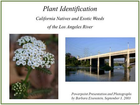 Plant Identification California Natives and Exotic Weeds of the Los Angeles River Powerpoint Presentation and Photographs by Barbara Eisenstein, September.
