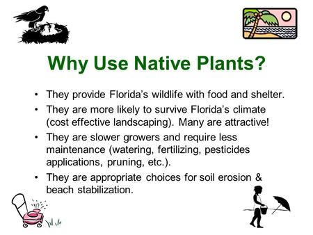 Why Use Native Plants? They provide Florida's wildlife with food and shelter. They are more likely to survive Florida's climate (cost effective landscaping).