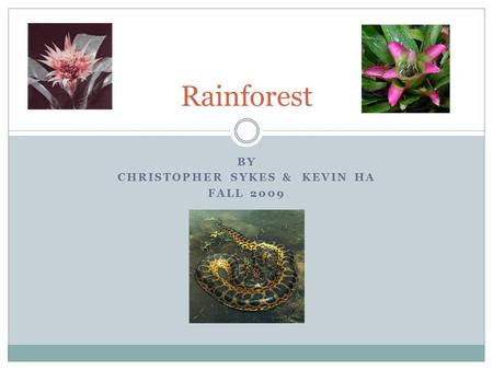 BY CHRISTOPHER SYKES & KEVIN HA FALL 2009 Rainforest.
