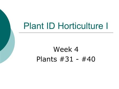 "Plant ID Horticulture I Week 4 Plants #31 - #40 Hosta sp.  Common name:  Hosta  Deciduous perennial  Height: 18""-20""  Average growth rate  Rounded."