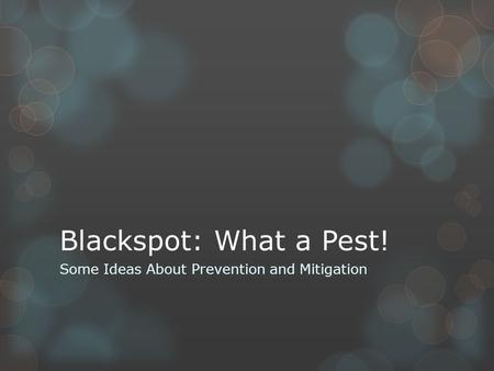 Blackspot: What a Pest! Some Ideas About Prevention and Mitigation.