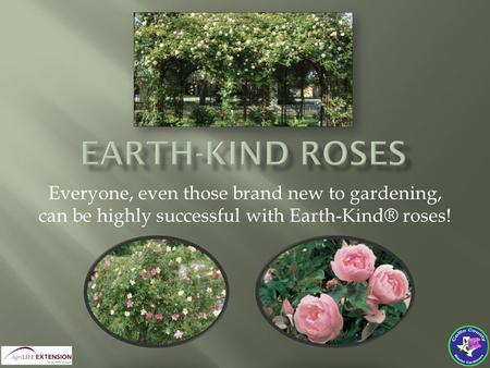 Everyone, even those brand new to gardening, can be highly successful with Earth-Kind® roses!