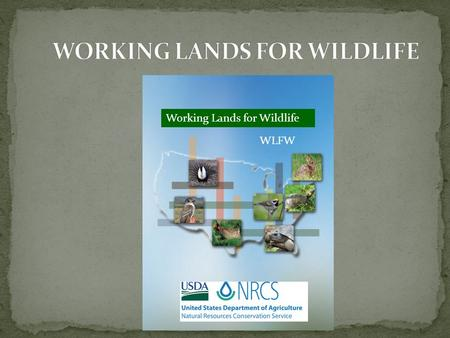 Working Lands for Wildlife WLFW. Focal Areas by Species.