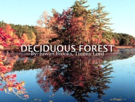 By: Juwan Brooks, Timmy Lord.  Deciduous forests can be found in the eastern half of North America, and the middle of Europe.  There are many deciduous.
