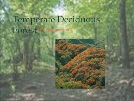 Temperate Deciduous Forest The best biome ever!!!.