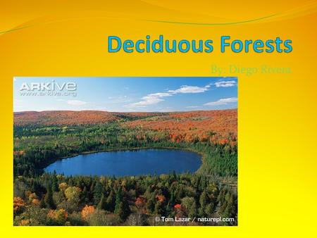 By: Diego Rivera What are Deciduous Forests? The term deciduous forest is used to describe a type of forest in which the dominant species of trees and.
