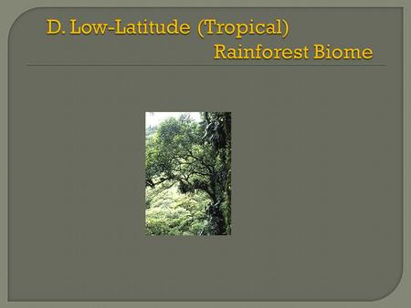  Abundant habitats and niches  Canopy: Emergents: highest trees (150 - 200 ft tall)  no branches at low levels  Buttresses  Umbrella-shaped.