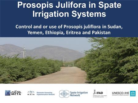 Control and or use of Prosopis juliflora in Sudan, Yemen, Ethiopia, Eritrea and Pakistan Prosopis Julifora in Spate Irrigation Systems.