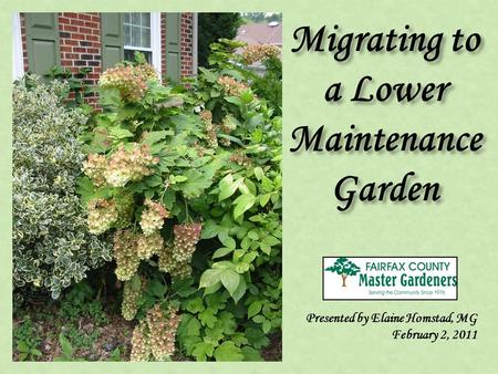 Migrating to a Lower Maintenance Garden Presented by Elaine Homstad, MG February 2, 2011.