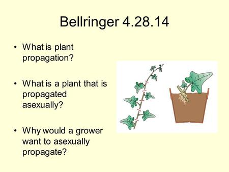 Bellringer 4.28.14 What is plant propagation? What is a plant that is propagated asexually? Why would a grower want to asexually propagate?