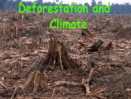 Forests Being Cut Vastly Faster Than They Can Grow Tropical deforestation, as countries scramble to sell off their timber and clear cut so they can grow.