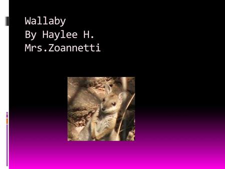 Wallaby By Haylee H. Mrs.Zoannetti Appearance  They look like mini kangaroos  Baby wallabies look like little bunnies.
