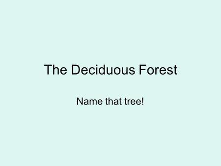 The Deciduous Forest Name that tree!. Forest layers.