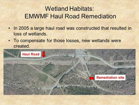 Wetland Habitats: EMWMF Haul Road Remediation In 2005 a large haul road was constructed that resulted in loss of wetlands. To compensate for those losses,