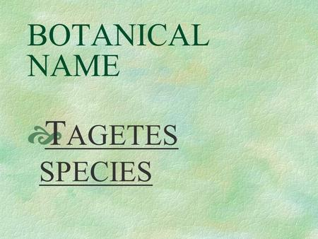 BOTANICAL NAME  T AGETES SPECIES PRONUNCIATION  TA - je - teez.
