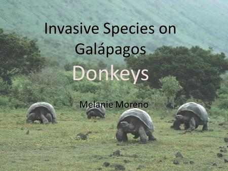 Invasive Species on Galápagos Donkeys