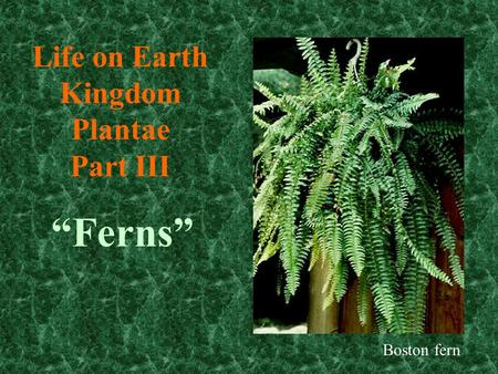 Life on Earth Kingdom Plantae Part III