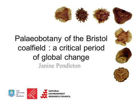 Palaeobotany of the Bristol coalfield : a critical period of global change Janine Pendleton.