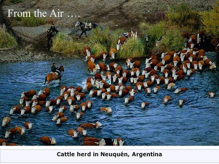 Cattle herd in Neuquén, Argentina From the Air ….