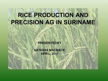 RICE PRODUCTION AND PRECISION AG IN SURINAME PRESENTED BY NATASHA MACNACK APRIL, 2011.