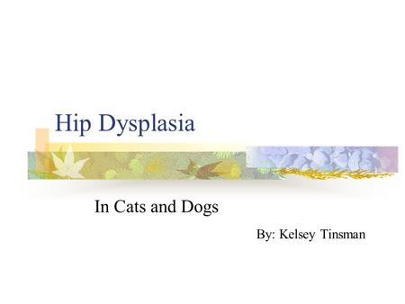 Hip Dysplasia In Cats and Dogs By: Kelsey Tinsman.