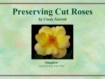 Preserving Cut Roses by Cindy Garrett Sunglow Miniflora from Whit Wells.