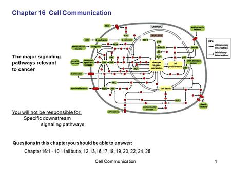 Cell Communication1 Chapter 16 Cell Communication The major signaling pathways relevant to cancer You will not be responsible for: Specific downstream.