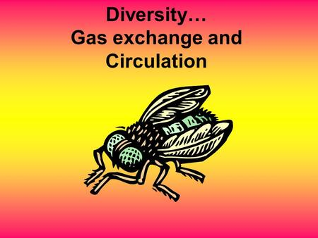 Diversity… Gas exchange and Circulation