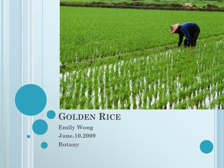 G OLDEN R ICE Emily Wong June.10.2009 Botany. Golden rice is a variety of Oryza sativa rice produced from genetic engineering Biofortification-noun. The.