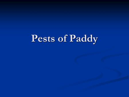 Pests of Paddy.