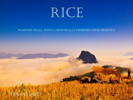 Rice starting small with a Genetically Modified food product Teri Wright.