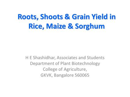 Roots, Shoots & Grain Yield in Rice, Maize & Sorghum H E Shashidhar, Associates and Students Department of Plant Biotechnology College of Agriculture,