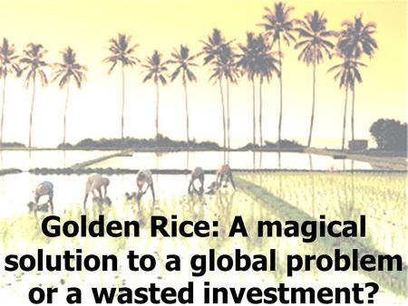 Golden Rice: A magical solution to a global problem or a wasted investment?