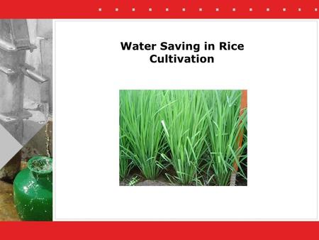 Water Saving in Rice Cultivation. Rice is a water intensive crop. Preferably it is not grown in areas with scarce groundwater resources It remains popular.