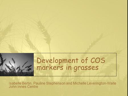 Development of COS markers in grasses Isabelle Bertin, Pauline Stephenson and Michelle Leverington-Waite John Innes Centre.