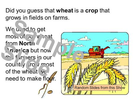 Did you guess that wheat is a crop that grows in fields on farms. We used to get most of our wheat from North America but now the farmers in our country.