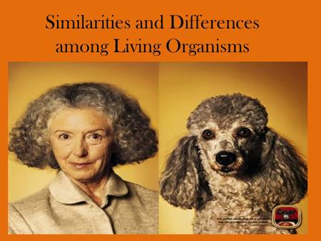 Similarities and Differences among Living Organisms.