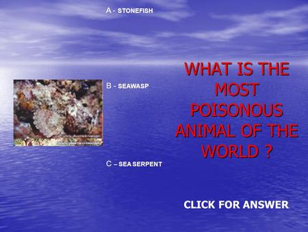 WHAT IS THE MOST POISONOUS ANIMAL OF THE WORLD ? A - STONEFISH B - SEAWASP C – SEA SERPENT CLICK FOR ANSWER.