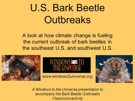 U.S. Bark Beetle Outbreaks A look at how climate change is fueling the current outbreak of bark beetles in the southeast U.S. and southwest U.S. A Windows.