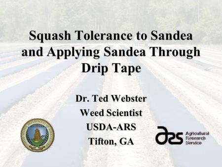 Squash Tolerance to Sandea and Applying Sandea Through Drip Tape Dr. Ted Webster Weed Scientist USDA-ARS Tifton, GA.
