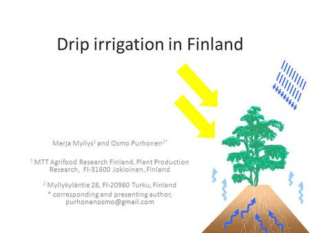 Drip irrigation in Finland Merja Myllys 1 and Osmo Purhonen 2* 1 MTT Agrifood Research Finland, Plant Production Research, FI-31600 Jokioinen, Finland.