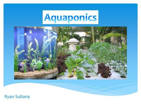 Ryan Sultana. What is Aquaponics? …'Aquaponics is the art of growing food with fish poop', Anonymous An integration of two systems: Hydroponics and Aquaculture.