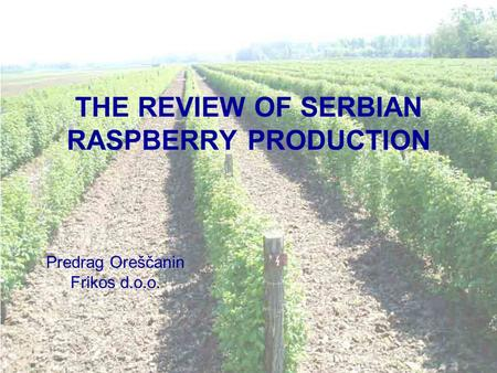 THE REVIEW OF SERBIAN RASPBERRY PRODUCTION Predrag Oreščanin Frikos d.o.o.